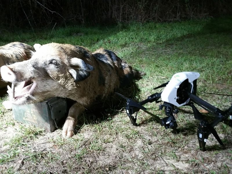 hog hunting with drones